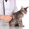 Ветеринарные клиники в Горячегорске